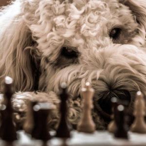 Еще раз о пользе от занятий шахматами